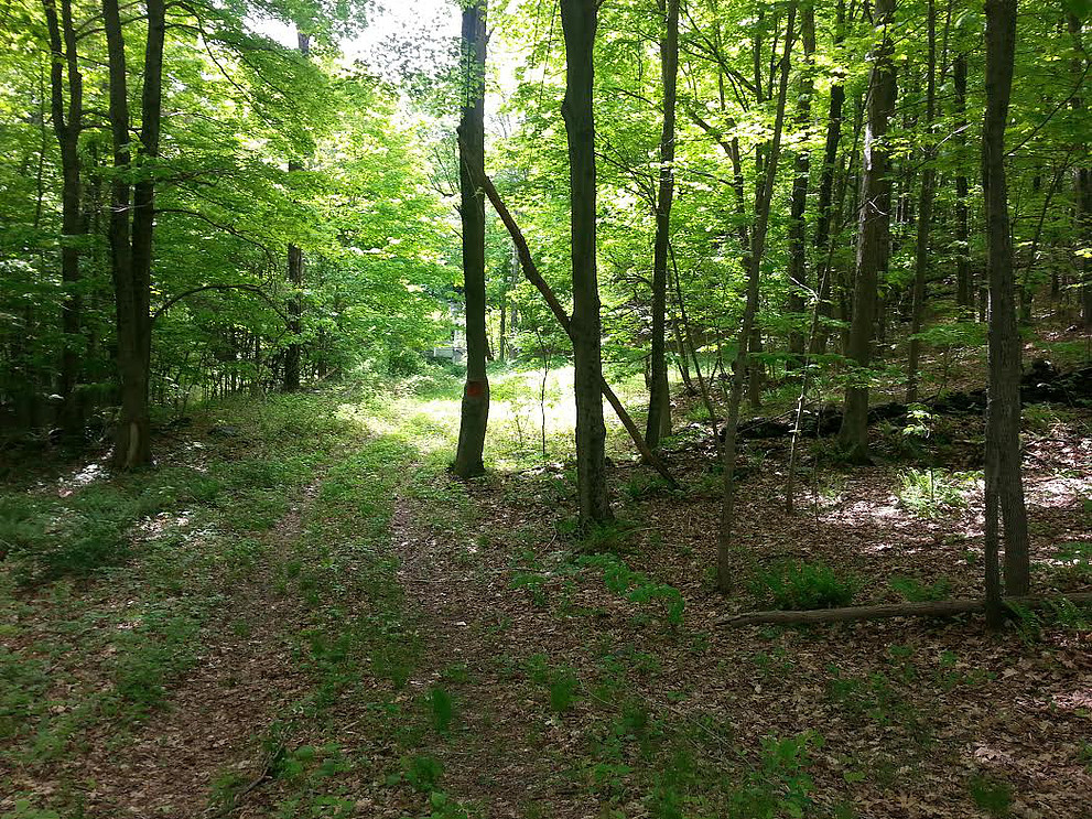 149 acres in Dutchess County, Wingdale NY